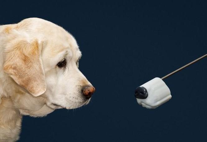 Thiết bị dò mìn không hiệu quả bằng khứu giác loài chó ảnh 2