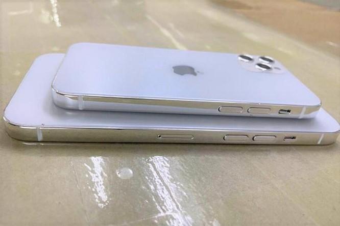 iPhone 12 sẽ có giá dưới 550 USD, ra mắt vào tháng 9? ảnh 1
