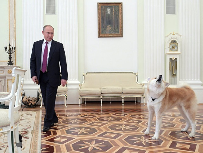 Ông Putin và chú chó được phía Nhật Bản tặng