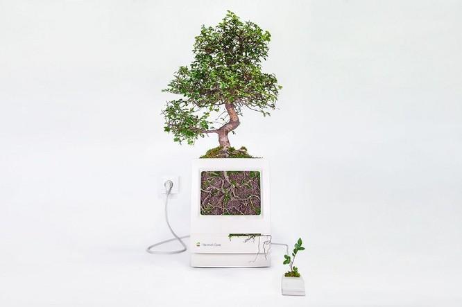 Dùng máy tính Mac trồng cây: Đừng quá phụ thuộc vào công nghệ ảnh 2
