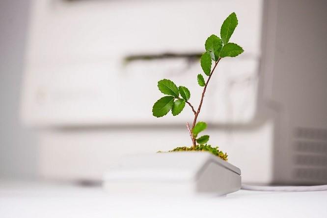 Dùng máy tính Mac trồng cây: Đừng quá phụ thuộc vào công nghệ ảnh 3
