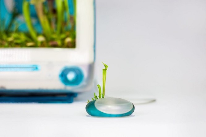 Dùng máy tính Mac trồng cây: Đừng quá phụ thuộc vào công nghệ ảnh 5