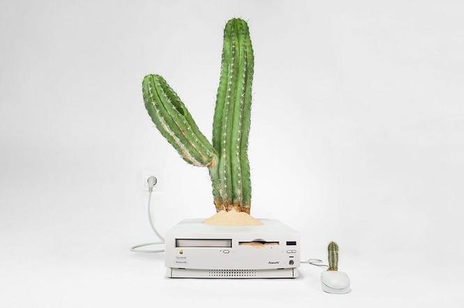 Dùng máy tính Mac trồng cây: Đừng quá phụ thuộc vào công nghệ ảnh 7