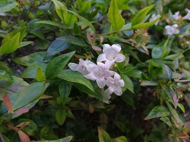 Những ảnh chụp đầu tiên từ camera của Huawei P10 ảnh 27