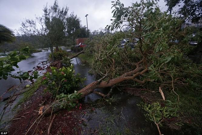 """""""Quái vật"""" Irma cuồng nộ khiến Florida (Mỹ) tan hoang ảnh 2"""