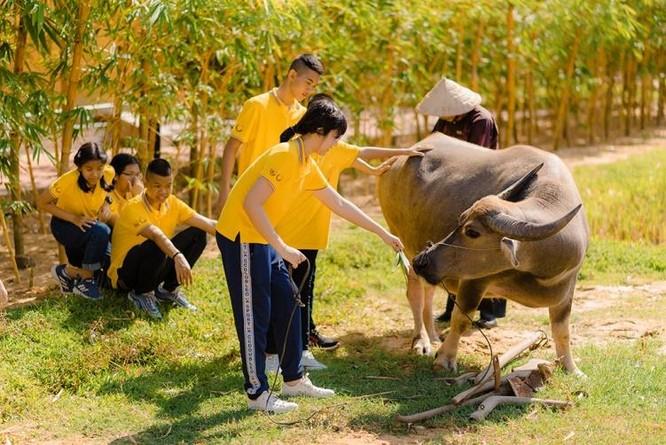"""Đoàn Thái Lan """"lạc"""" vào khung cảnh làng quê Bắc Bộ với lũy tre xanh, ruộng lúa vàng ươm mùa thu hoạch, những chú trâu chăm chỉ nhai rơm và đàn bò đang nhẩn nha nhai cỏ. Hình ảnh đặc trưng văn hóa đồng bằng Bắc Bộ này hiện khó để tìm thấy ngay cả ở các vùng nông thôn miền Bắc ngày nay."""