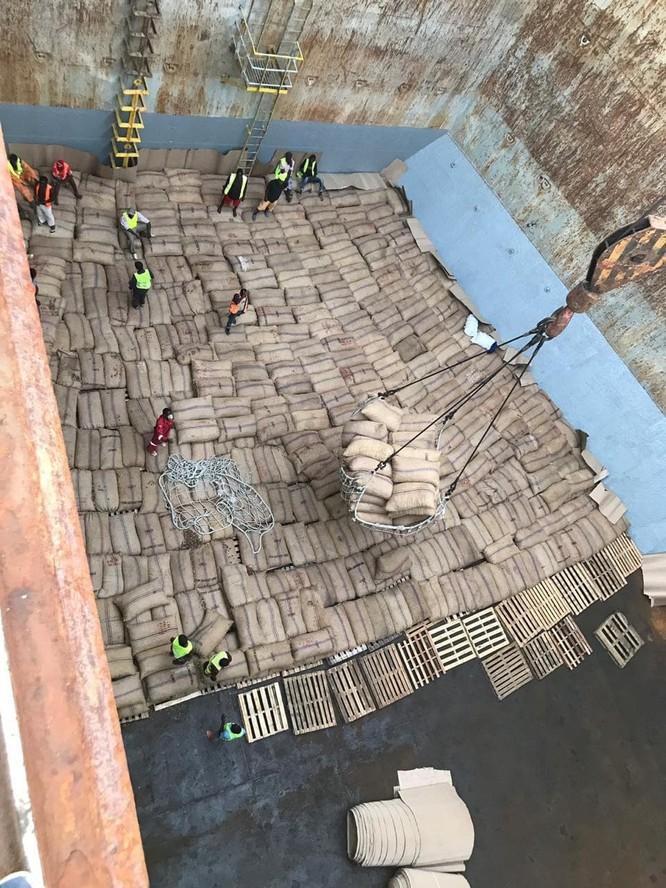 Điều thô nhập khẩu từ Tanzania được đưa lên tàu để chuyển về Việt Nam