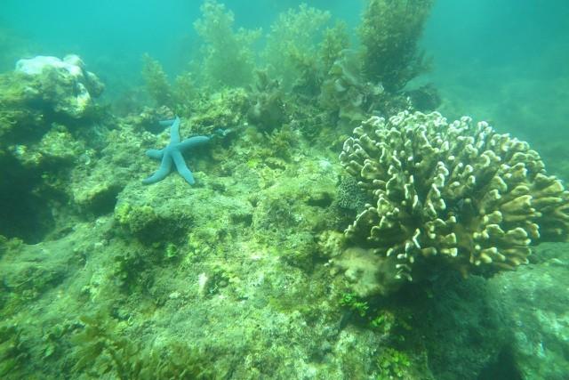 KDI Holdings đầu tư 15 tỷ đồng tái sinh san hô tại Nha Trang ảnh 1