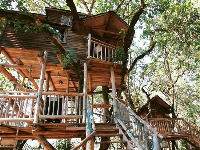 35 ngôi nhà trên cây tuyệt đẹp khiến bạn muốn sống thử một lần ảnh 20