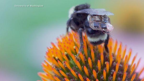 'Biến' ong lớn thành máy bay không người lái IOT - ảnh 2