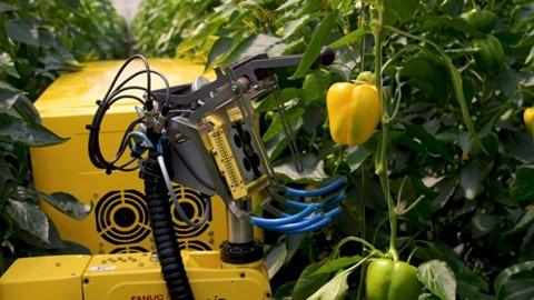 Robot hái ớt chuông trong 24 giây - ảnh 1