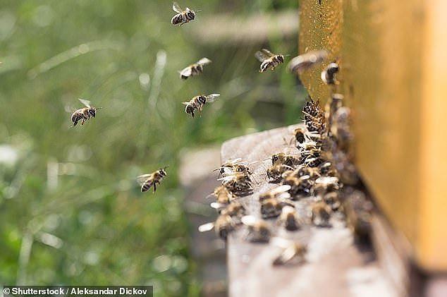 Đột phá khoa học: Robot phiên dịch giữa ong và cá - ảnh 2