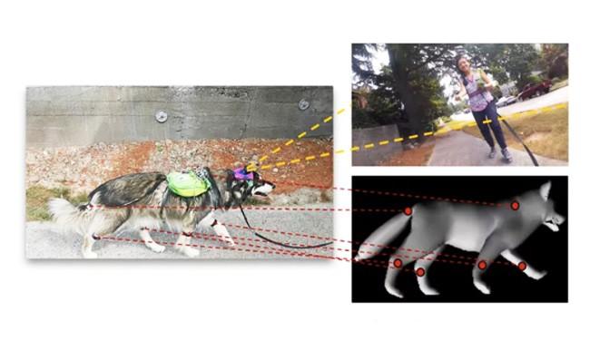 Các nhà khoa học đang dạy AI theo cách nghĩ của loài chó ảnh 1