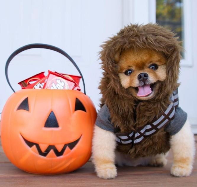 Chú chó Jiff Pom nổi tiếng ra sao mà được xuất hiện trong sự kiện lớn nhất năm của Facebook? ảnh 14