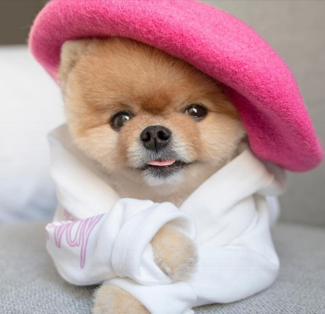 Chú chó Jiff Pom nổi tiếng ra sao mà được xuất hiện trong sự kiện lớn nhất năm của Facebook? ảnh 15