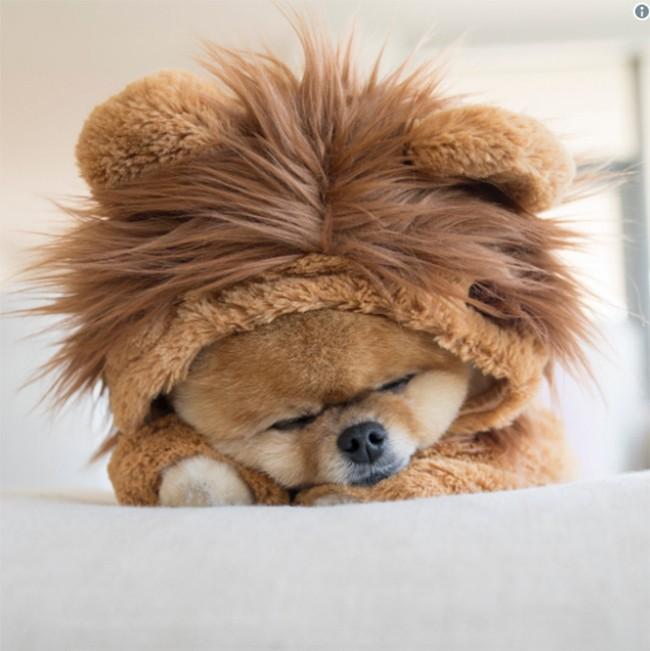 Chú chó Jiff Pom nổi tiếng ra sao mà được xuất hiện trong sự kiện lớn nhất năm của Facebook? ảnh 16