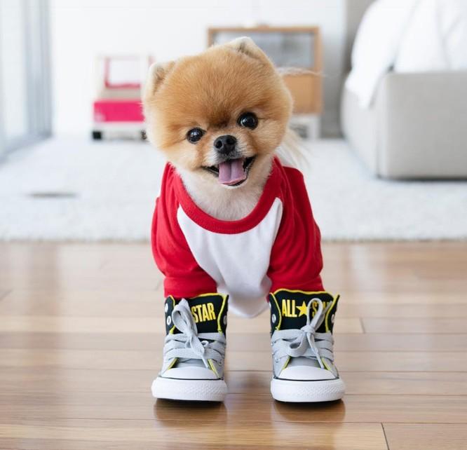 Chú chó Jiff Pom nổi tiếng ra sao mà được xuất hiện trong sự kiện lớn nhất năm của Facebook? ảnh 1