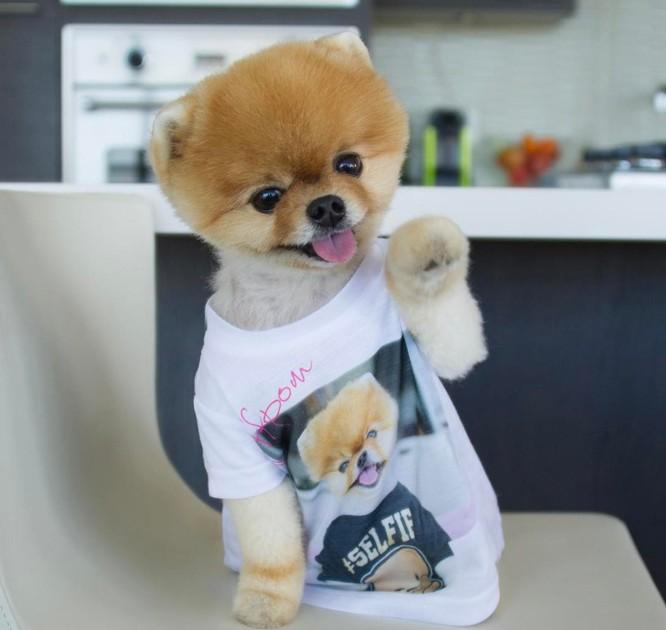 Chú chó Jiff Pom nổi tiếng ra sao mà được xuất hiện trong sự kiện lớn nhất năm của Facebook? ảnh 2