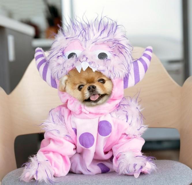 Chú chó Jiff Pom nổi tiếng ra sao mà được xuất hiện trong sự kiện lớn nhất năm của Facebook? ảnh 4