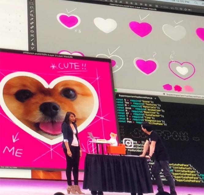 Chú chó Jiff Pom nổi tiếng ra sao mà được xuất hiện trong sự kiện lớn nhất năm của Facebook? ảnh 6