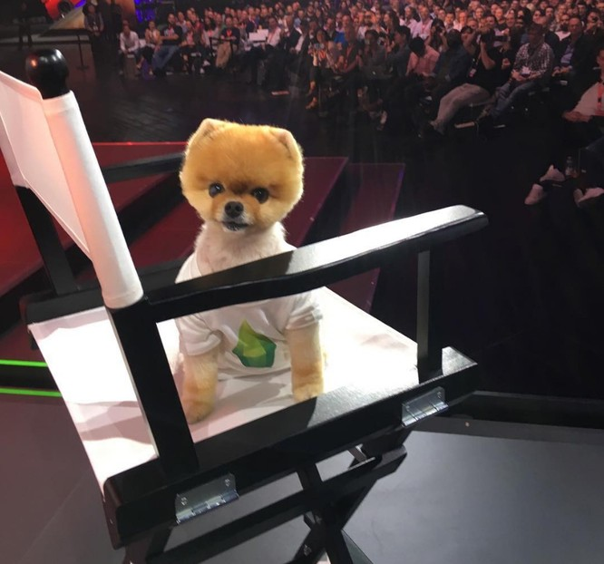 Chú chó Jiff Pom nổi tiếng ra sao mà được xuất hiện trong sự kiện lớn nhất năm của Facebook? ảnh 7