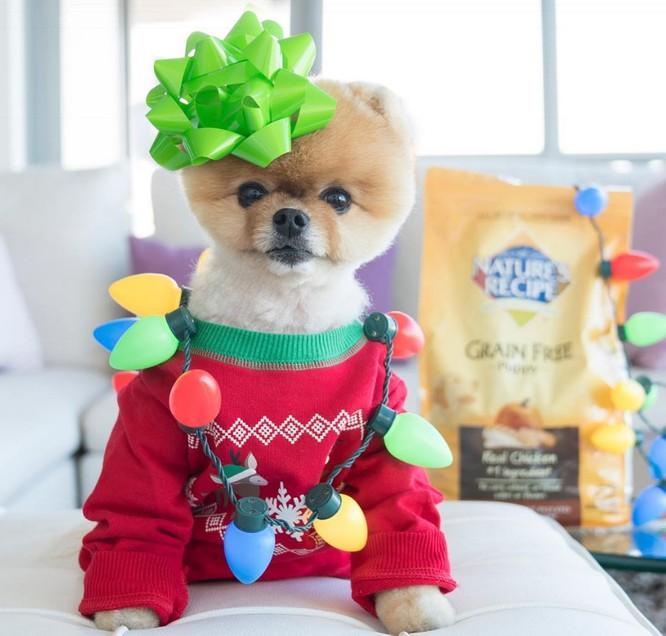 Chú chó Jiff Pom nổi tiếng ra sao mà được xuất hiện trong sự kiện lớn nhất năm của Facebook? ảnh 8