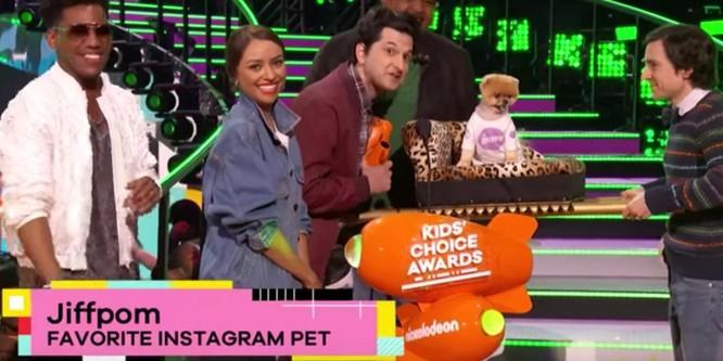 Chú chó Jiff Pom nổi tiếng ra sao mà được xuất hiện trong sự kiện lớn nhất năm của Facebook? ảnh 10