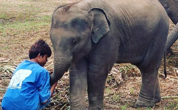 Gây quỹ cộng đồng trực tuyến giúp người dân châu Á giải cứu từ thịt bò cho đến voi đói ảnh 3