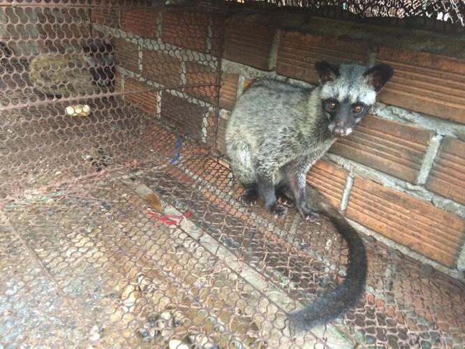 Bài học từ COVID-19: Chấm dứt buôn bán động vật hoang dã để phòng ngừa đại dịch mới ảnh 3