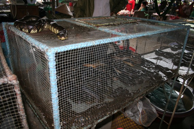 Bài học từ COVID-19: Chấm dứt buôn bán động vật hoang dã để phòng ngừa đại dịch mới ảnh 1