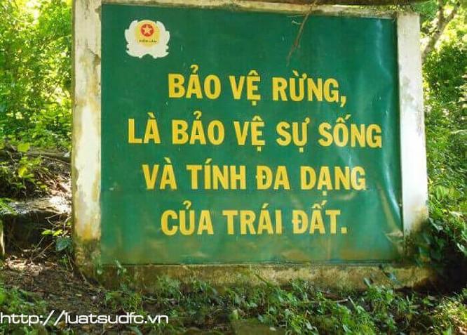 """TS Triệu Văn Hùng: """"Trồng rừng thay thế bằng keo, bạch đàn thì làm sao giữ được đa dạng sinh học!"""" ảnh 2"""