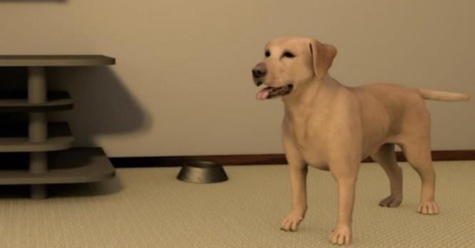 """Chó """"ảo"""" dạy con người cách tránh bị chó thật cắn ảnh 1"""