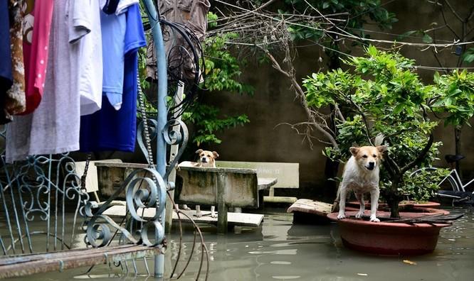 Cuộc sống thường nhật tại TP.HCM đảo lộn sau trận lụt lịch sử ảnh 11