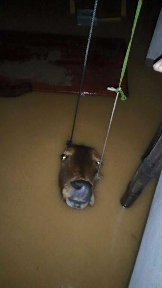 Miền Trung oằn mình trong trận mưa lũ lịch sử ảnh 9