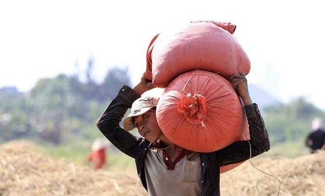 Lên Sài Gòn gặt lúa thuê kiếm tiền ăn tết ảnh 7