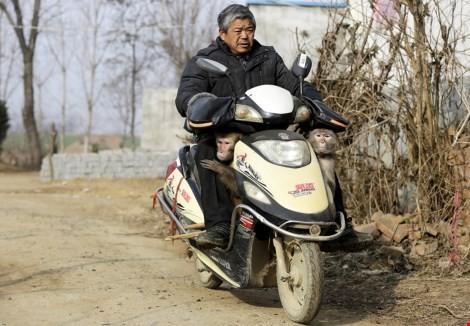 Làng 'tề thiên đại thánh' ở Trung Quốc ảnh 5