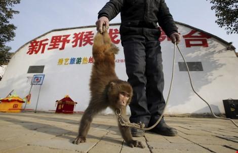 Làng 'tề thiên đại thánh' ở Trung Quốc ảnh 1