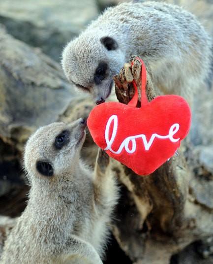 Chùm ảnh yêu đương siêu dễ thương ngày Valentine ảnh 7