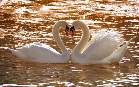 Chùm ảnh yêu đương siêu dễ thương ngày Valentine ảnh 15