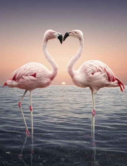 Chùm ảnh yêu đương siêu dễ thương ngày Valentine ảnh 13