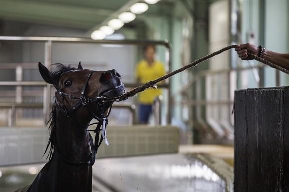 Ngành kinh doanh đua ngựa tỷ USD ở Hong Kong ảnh 5