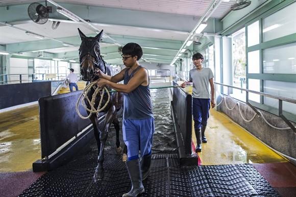 Ngành kinh doanh đua ngựa tỷ USD ở Hong Kong ảnh 7