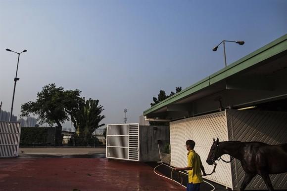 Ngành kinh doanh đua ngựa tỷ USD ở Hong Kong ảnh 8