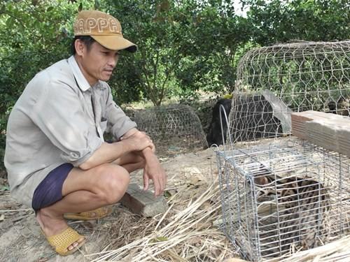 Tưởng chồn ăn thịt gà, bẫy được con vật giống mèo rừng Châu Phi ảnh 1