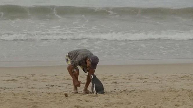 Chú chim cánh cụt mỗi năm vượt 8.000km thăm người cứu mạng ảnh 2