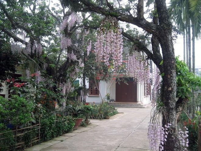 Căn nhà nên thơ của vị thanh tra trong vườn lan rủ ảnh 1