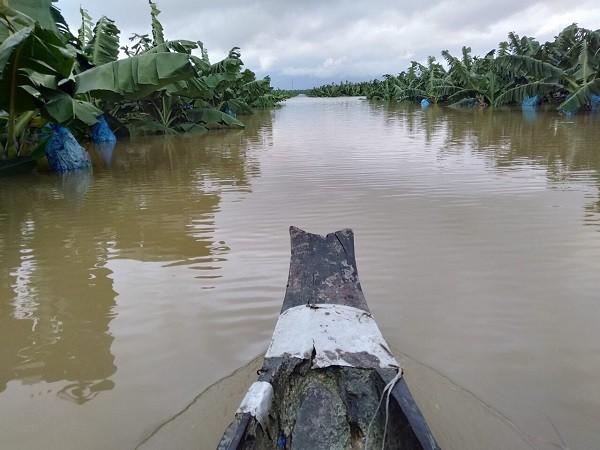 """Ông Trời lại làm khó HAGL Agrico: 1.500 ha cây ăn trái ngập lụt trong """"hiện tượng thời tiết bất thường chưa từng xảy ra tại Lào"""" ảnh 1"""