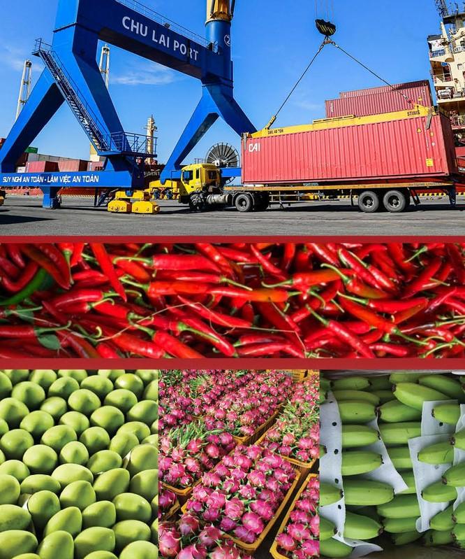 THILOGI hỗ trợ xuất khẩu ớt cho nông dân miền Trung ảnh 1