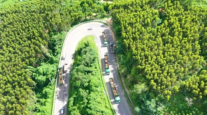 Logistics trọn gói cho nông nghiệp - THILOGI góp phần mang nông sản Việt ra thế giới ảnh 2