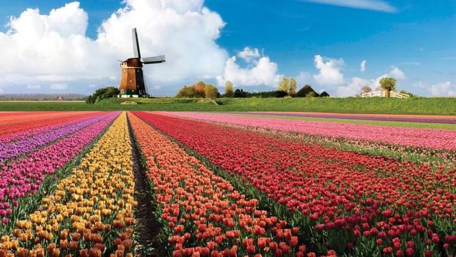Những cánh đồng hoa đẹp nhất thế giới khiến ai cũng phải ngẩn ngơ ảnh 6